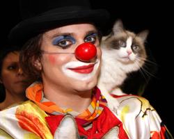 Куклачёв и кошки в Барнауле