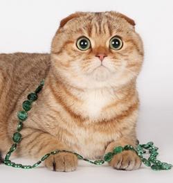 Выставка кошек в Новоалтайске 21 апреля 2013