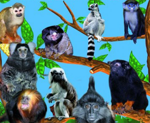 "Выставка обезьян во ""Дворце спорта"" в Барнауле"