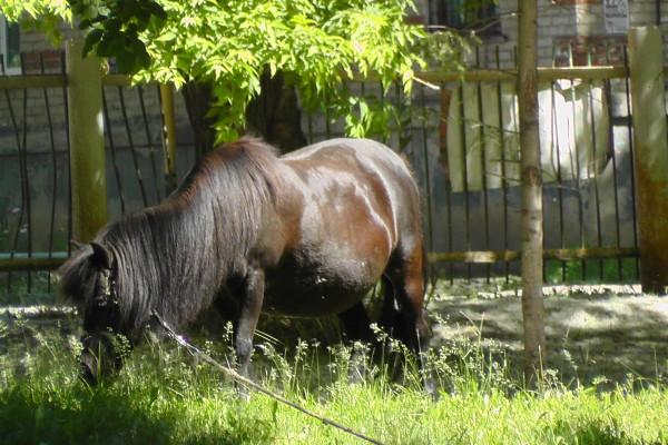 Лошадь в парке в Новоалтайске