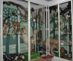 Экспозиции новоалтайского краеведческого музея. Прицы и звери края.