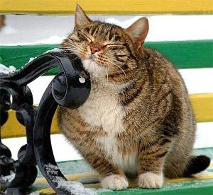 мартовский кот зоопарк Барнаул