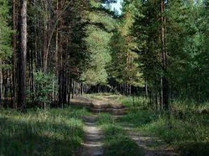 Алтайский лес закроют от посетителей