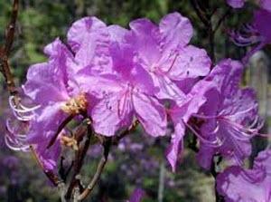 На туристическую выставку и праздник «Цветение маральника» можно будет добраться бесплатно