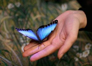 Выставка тропических бабочек в Новоалтайске
