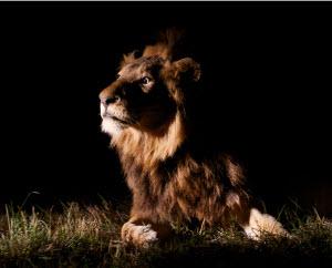 Жителей края приглашают на «Ночь в зоопарке»