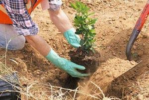 Жителей Алтайского края приглашают принять участие в акции «Один житель – одно дерево»