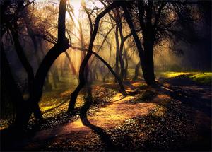 Мини-выставка Загадочный лес