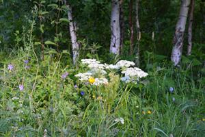 Первомайский район - природа