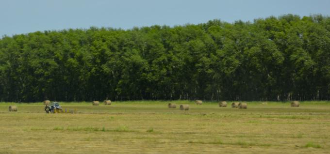 Первомайский район - заготовка сена