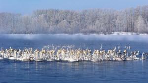 «Алтайская зимовка» встречает первых гостей