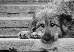 В Барнауле пройдет благотворительный аукцион в поддержку бездомных животных