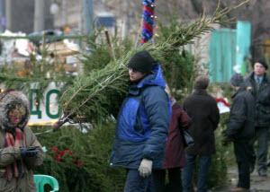 В Новоалтайске открылись 13 елочных базаров